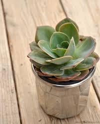 diy mercury glass succulent planters a night owl blog