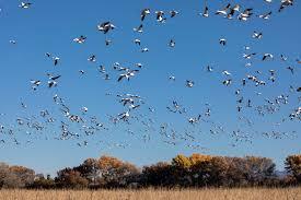 Hummingbird Migration Map When Exactly Is Hummingbird Migration