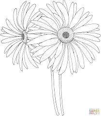 daisy coloring pages free coloring pages