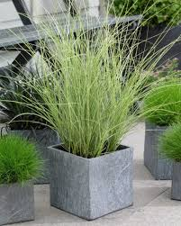 best ornamental grasses for containers growing ornamental grass