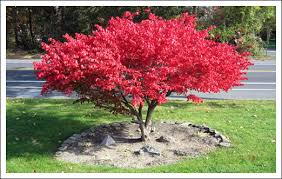 Backyard Trees For Shade - download small trees for yard solidaria garden