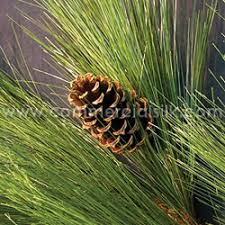 pine description use varieties of artificial pine trees