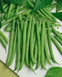 Types Of Vegetables To Grow In A Garden - garden planting guide urban farmer seeds