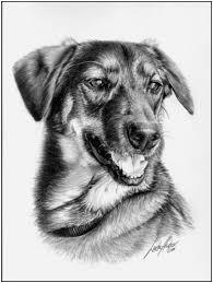 228 best animals rysunek ołowkiem images on pinterest dogs