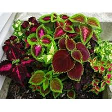 ornamental plants decorative plant medicinal plant air