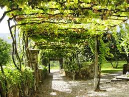 Arbor Ideas Backyard 25 Unique Grape Arbor Ideas On Pinterest Grape Vine Trellis