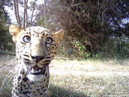 india u0027s top wild animal selfies u2013 national geographic society blogs