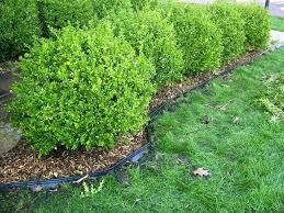 back to best metal landscape edging ideas lawn bunnings jen joes