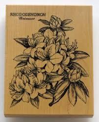 botanical illustration jessie wu ink u0027d pinterest botanical