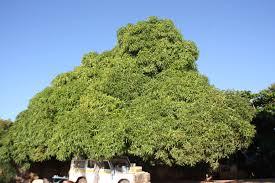 Mango Boom malawi bos birkhoven bij amersfoort