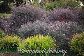 australian native plants for rock gardens video and photos plants for sandy soils native plant and revegetation specialists