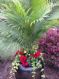red solenia begonias with majesty palm flower planters