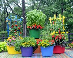 pretty kitty teacup colorful tubs and trellises and more in and