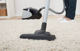 to vacuum how to vacuum during a flea infestation pet health central