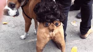 spirit halloween cerberus cerberus harry potter gif gifs show more gifs