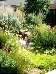 Small Tropical Garden Ideas Backyard Tropical Backyard Fearsome Tropical Garden Design Uk