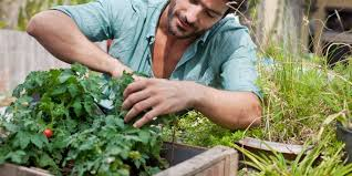 10 gardening tips for beginners container vegetable gardening