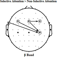 frontiers selective attention enhances beta band cortical