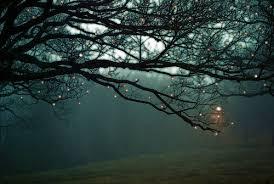 photography lights light tree beautiful summer sky