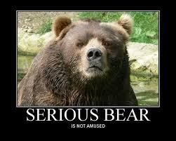 Funny Bear Memes - funny pics with bear recherche google wildlife pinterest