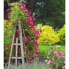 clematis rosemoor gardini white flower farm