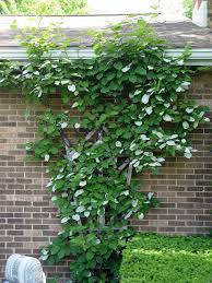 wood vine trellis on wall u2013 outdoor decorations