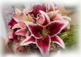 Star Gazer Lily Stargazer Lily Wedding Flowers