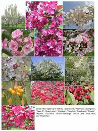 85 best landscape plants images on plants garden