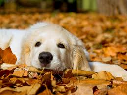 cute fall wallpapers cute dog wallpapers for desktop 3d wallpapers pinterest dog