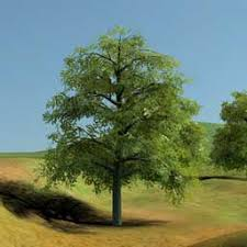rendering trees with indirect lighting in real time
