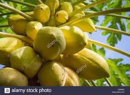 philippines fruit stock photos u0026 philippines fruit stock images