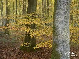 chambre d hote lyons la foret location lyons la forêt dans un bungalow pour vos vacances