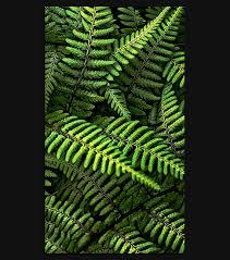 green fern 1080 x 1920 hd wallpaper spliffmobile