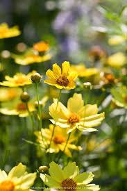722 best plants i love images on pinterest flowers flower