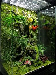 with water absolutely obsessed vivarium inspiration