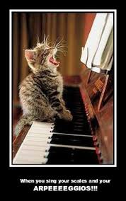 Cat Playing Piano Meme - cat piano classical music pinterest pianos cat and gatos