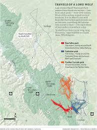 Jasper National Park Canada Map by Banff Wolf Makes 13 Day 481 Kilometre Solo Trek Before Returning