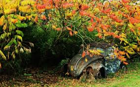 old rusty volkswagen rusty vw beetle rusty pinterest vw beetles beetles and busses