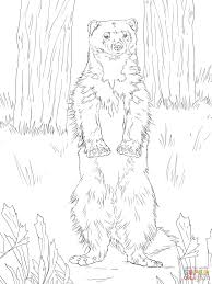 wolverine standing up coloring page free printable coloring pages