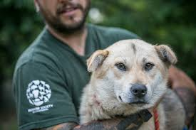 more dogs pulled from the depths of the south korean dog meat