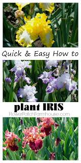 Plant Flower Garden - best 25 how to plant flowers ideas on pinterest insect
