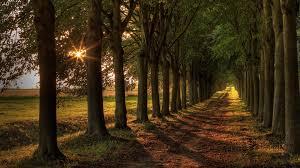 gorgeous trees hd wallpaper 1682181