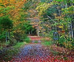 Northern Comfort Bridgewater Ma Newburyport Trails U0026 Trail Maps Traillink Com