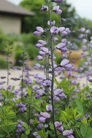 missouri native plants are native plants really drought tolerant dyck arboretum
