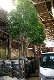 mall silks artificial trees plants large artificial trees