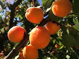 fruit tree planting care tips faddegon s nursery inc