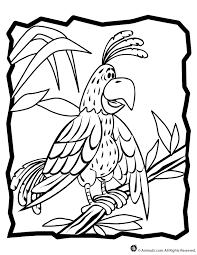 parrot pictures color kids coloring