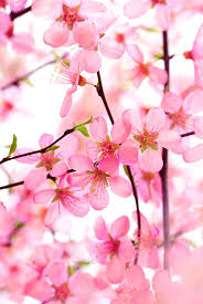hd images of flowers world u0027s top 100 beautiful flowers images wallpaper photos free