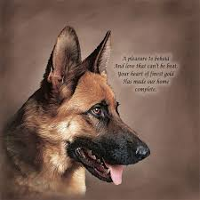 belgian malinois quotes 492 best my favorite breed of dog the german shepherd images on
