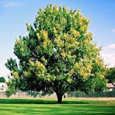 large tree transplants rockland ny tree transplants rockland ny